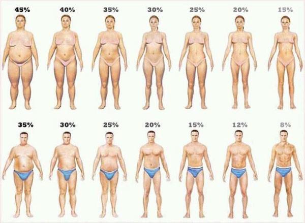 Body Fat Percentage Chart