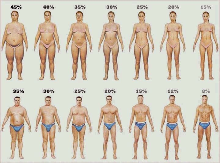 BodyFat Percentage